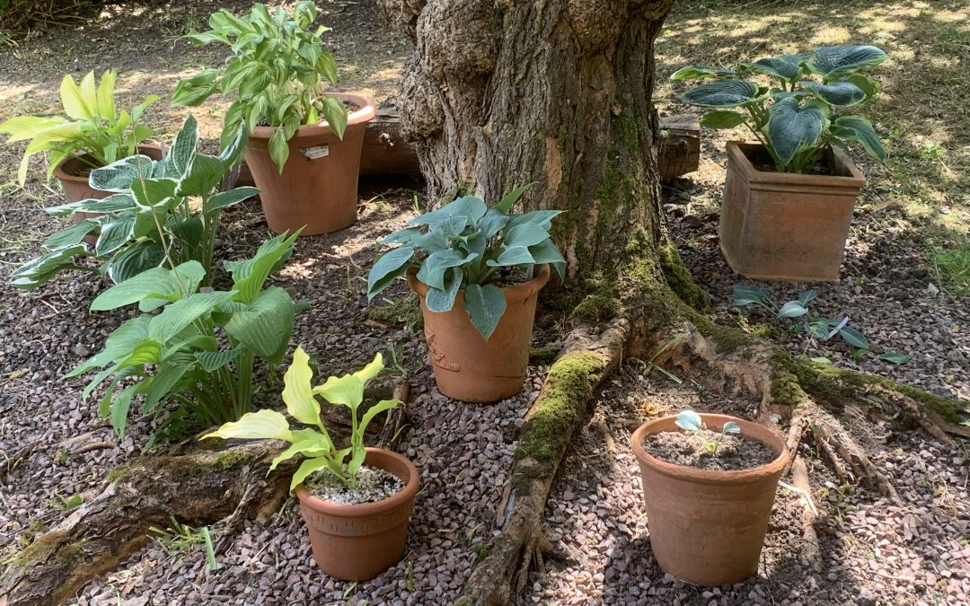 Malvern Circle lockdown garden competition